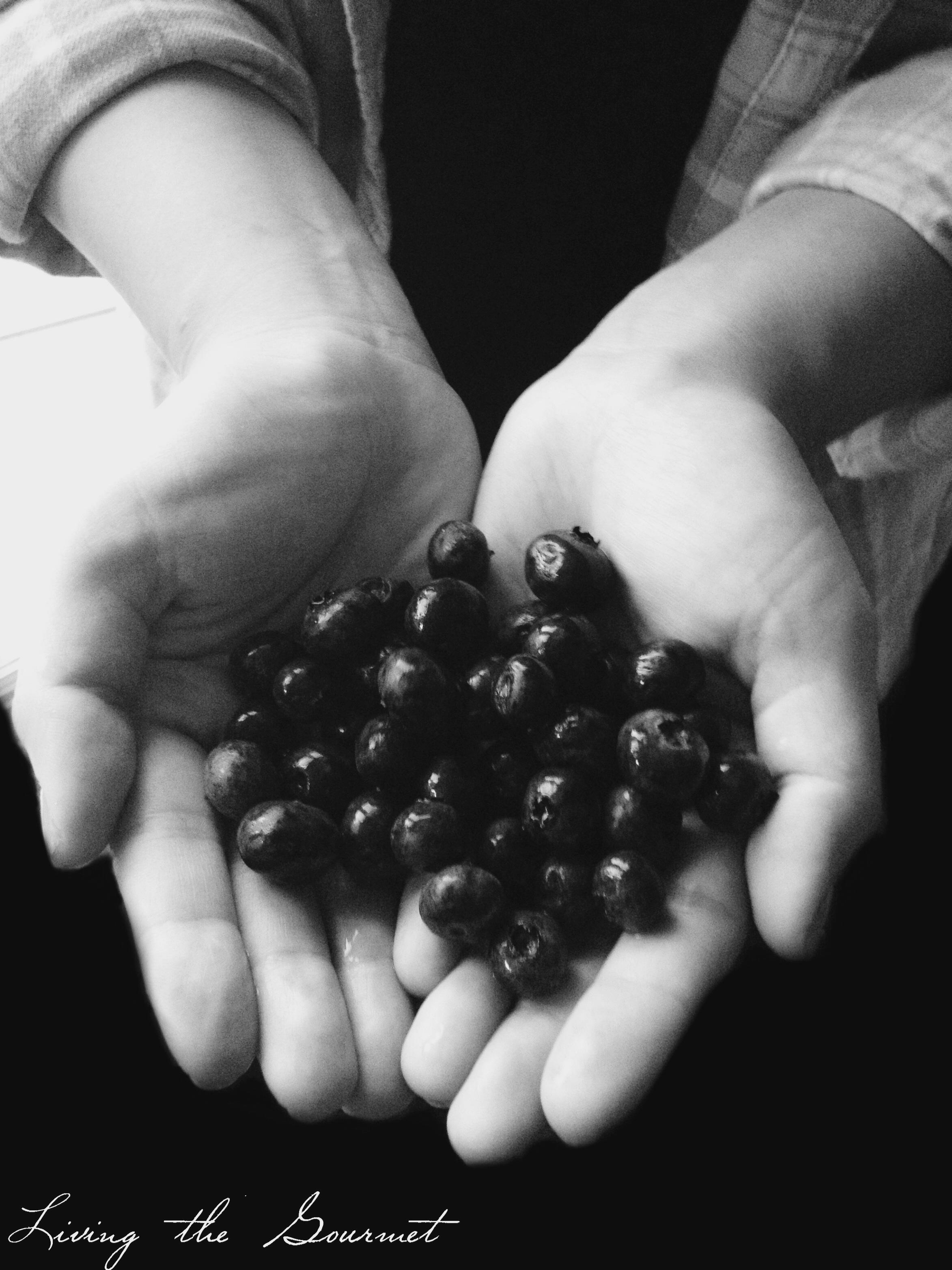 BlueberryMuffins1